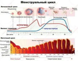 Что влияет на месячные эстрогены или
