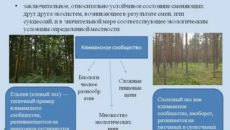 Что такое климаксное состояние экосистемы